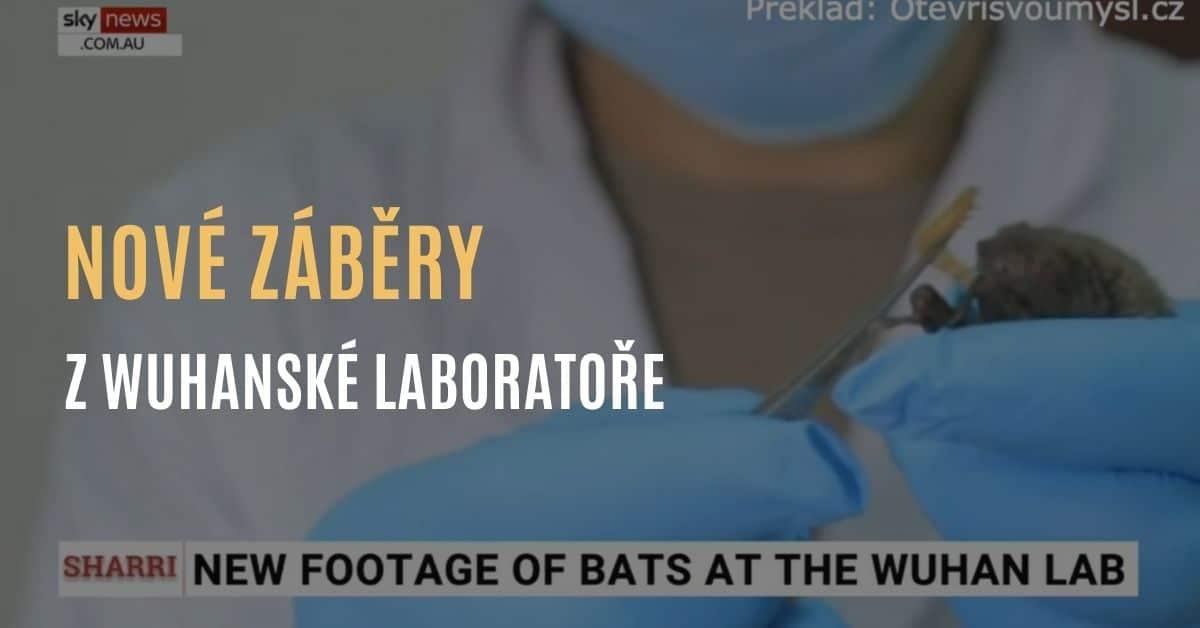 Nové záběry ukazují, že ve wuhanské laboratoři experimentovali s netopýry